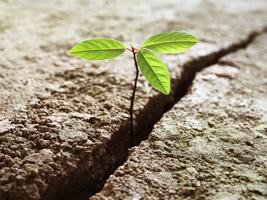 Hoffnung Sprüche Schöne Sprüche über Die Hoffnung Spruchcom